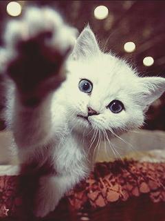 картинки на телефон скачать с котятами