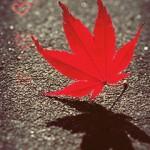 Random image: fall1