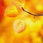 Random image: fall2