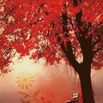 Random image: fall3