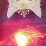 Random image: Кошка-в-короне