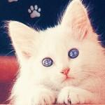 Random image: белый-котик