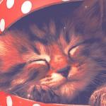 Random image: котенок-в-коробке