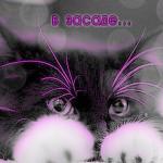 Random image: кот-в-засаде