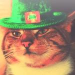Random image: кот-в-зеленой-шляпе
