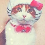 Random image: красивый-котик