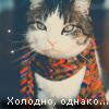 Random image: зверушки-9-кот