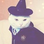 Random image: кот-Гарри-Поттер